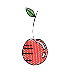 Delicious and sweet cherry vector