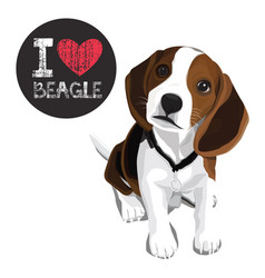 I love beagle vector