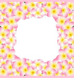 pink plumeria border vector image