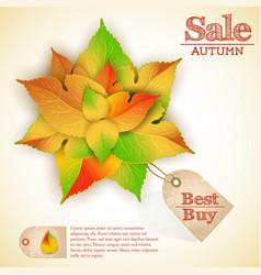 September natural autumn sale poster vector