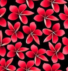 Red tropical frangipani with black background vector image