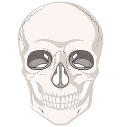 Cracked marks on human skull vector image