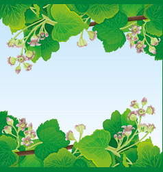 frame currant leaves and flowers vector image