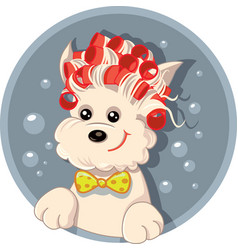 funny dog with hair rollers pet salon carto vector image