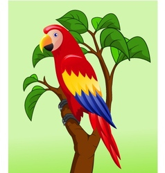 Funny Parrot vector image