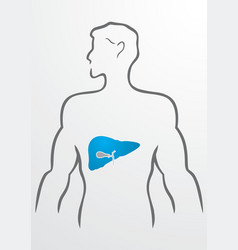 Liver and human body vector image