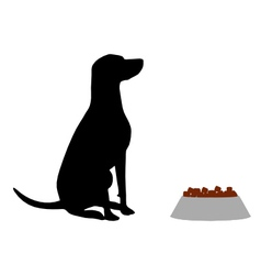 Dog feeding vector image vector image