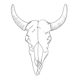 isolated drawing of the cows skull deaths head vector image