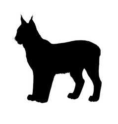 lynx silhouette black white vector image