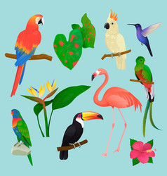 tropical birds flamingo and exotic parrot vector image vector image