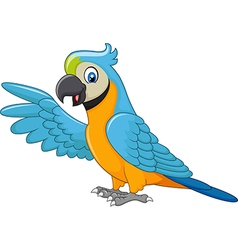 Cartoon macaw presenting isolated vector image vector image