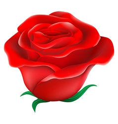 A fresh red rose vector