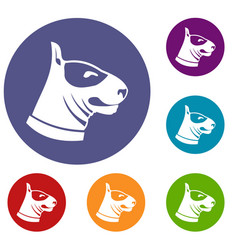 bull terrier dog icons set vector image