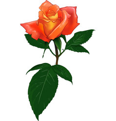 color rose vector image