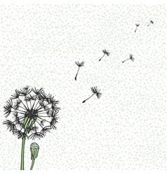 dandelion hand drawing flying blow vector image