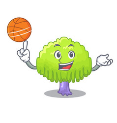With basketball isolated weeping willow on the vector