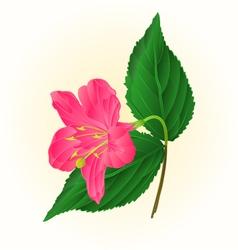 Pink flower decorative shrub Weigela vintage vector image