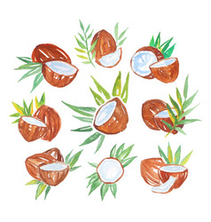 coconuts with palm leaves set watercolor vector image