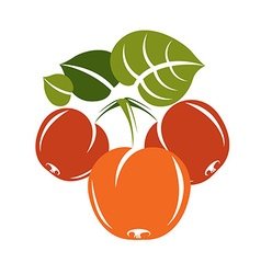 Vegetarian organic food simple ripe sweet o vector