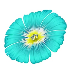 A blooming blue flower vector image