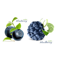 Blueberries and blackberry vector