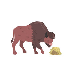 Buffalo eating hay bison animal side view vector