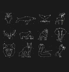 collection animals constellation on dark sky vector image