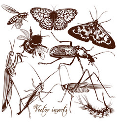 collection antique hand drawn insects vector image