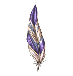 Colorful detailed beige and violet bird feather vector