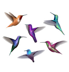 Flying hummingbirds little colored birds exotic vector