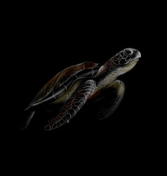 Portrait of a big sea turtle on a black background vector
