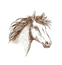 Sketch of horse head for equine design vector