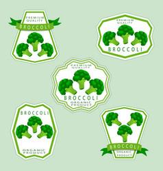 The broccoli vector
