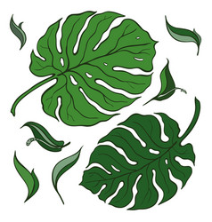Tropical set palm leaves vector
