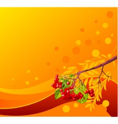 mountain ash branch background vector image vector image