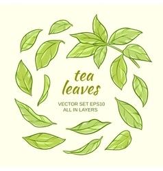 Tea leaves set vector
