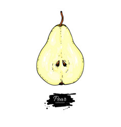 pear slice drawing isolated hand drawn vector image vector image
