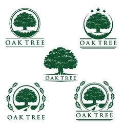 eco green oak tree logo design vector image
