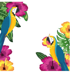 exotic and tropical birds frame vector image
