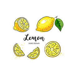 Lemon fruit drawing watercolor lemons on a white vector
