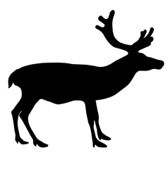 Silhouette deer with great antler on white vector