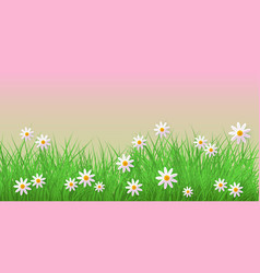 Spring grass and chamomiles border on pink vector