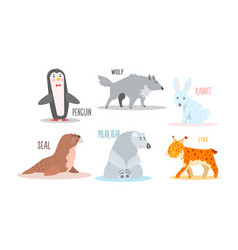 Collection arctic animals with names penguin vector