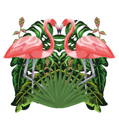 flamingos exotic and tropical birds vector image