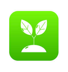 plant sprout icon green vector image
