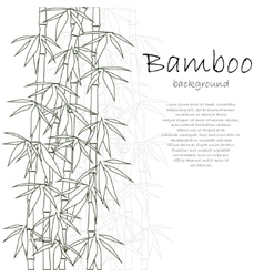 Bamboo background white vector image
