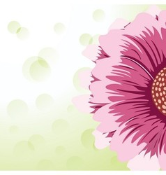 Gerbera daisy vector image vector image