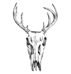 Hand drawn black and white deer scull vector image vector image