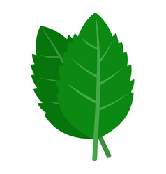 fresh green basil leaves icon isolated vector image