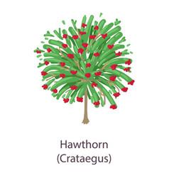 Hawthorn icon flat style vector